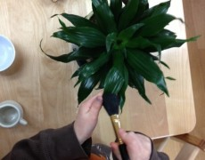 Dusting a plant- Care of the environment